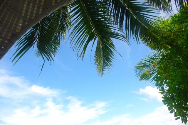 マイルを貯めてハワイ旅行