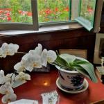 フランス旅行記8:ジヴェルニー モネの家探訪