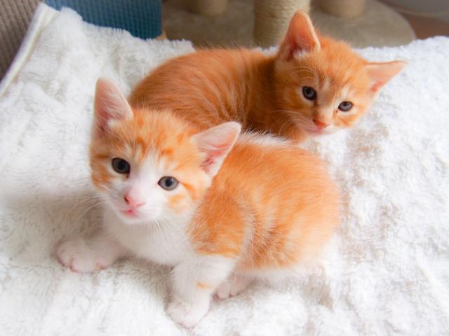 子猫の姉妹モッピーとモバトク