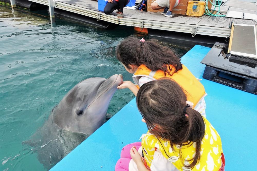 【沖縄旅行】イルカと遊べるホテル「ルネッサンスリゾートオキナワ」は子連れにオススメ