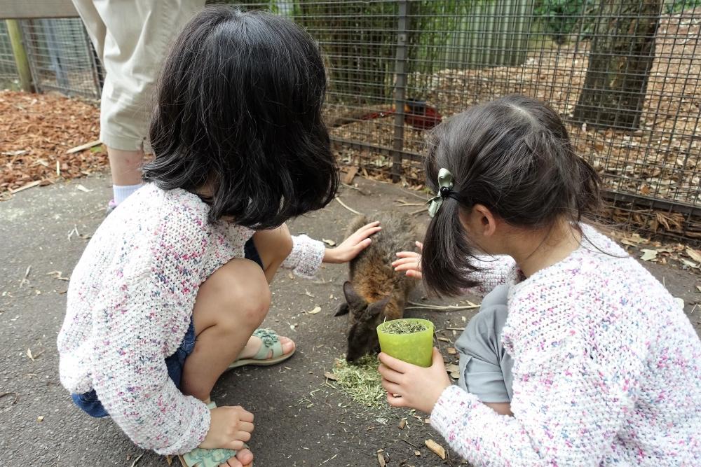 フェザーデール動物園 カンガルーと触れ合う