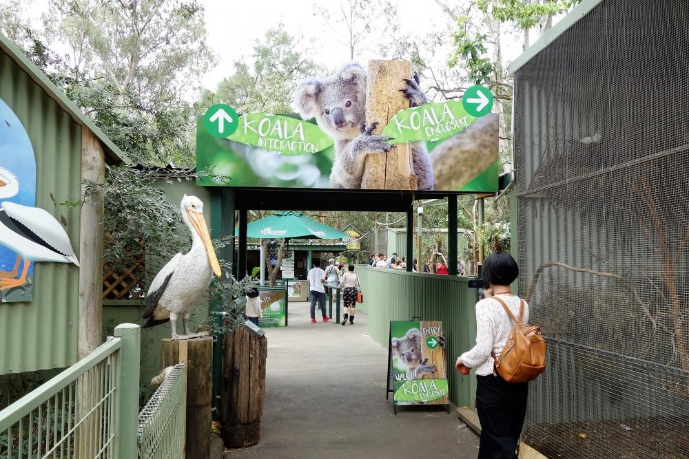 フェザーデール動物園 コアラサンクチュアリ