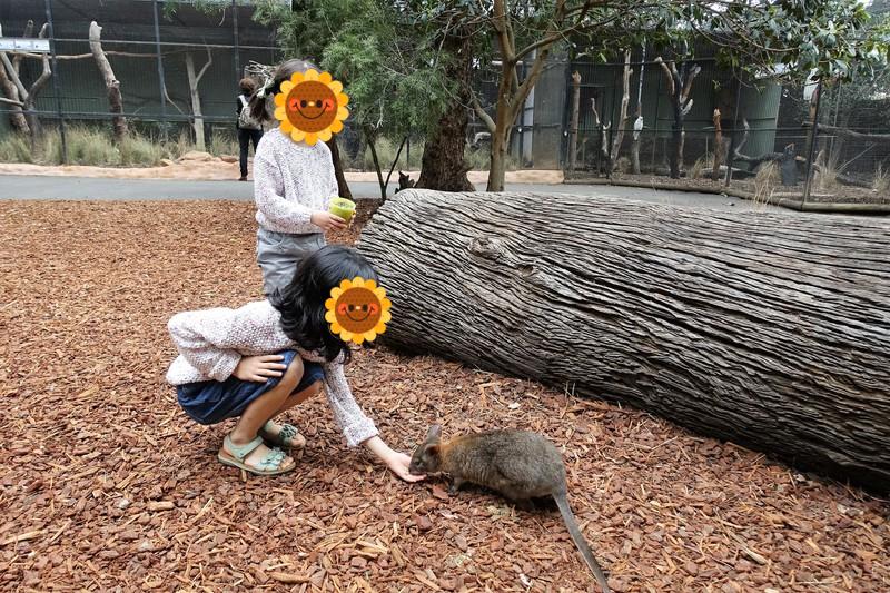 フェザーデール動物園 カンガルーの餌やり