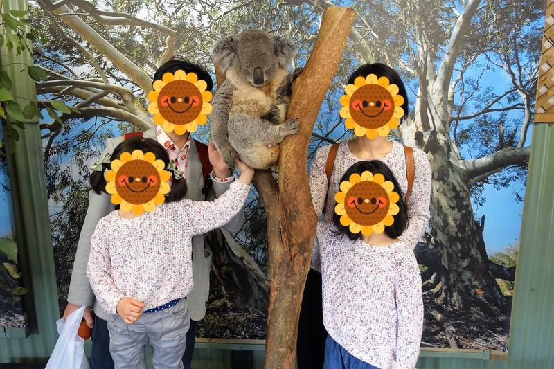 フェザーデール動物園 コアラと記念撮影