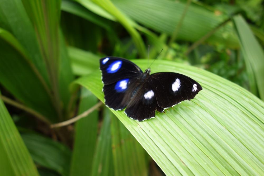 シドニーシーライフの蝶々