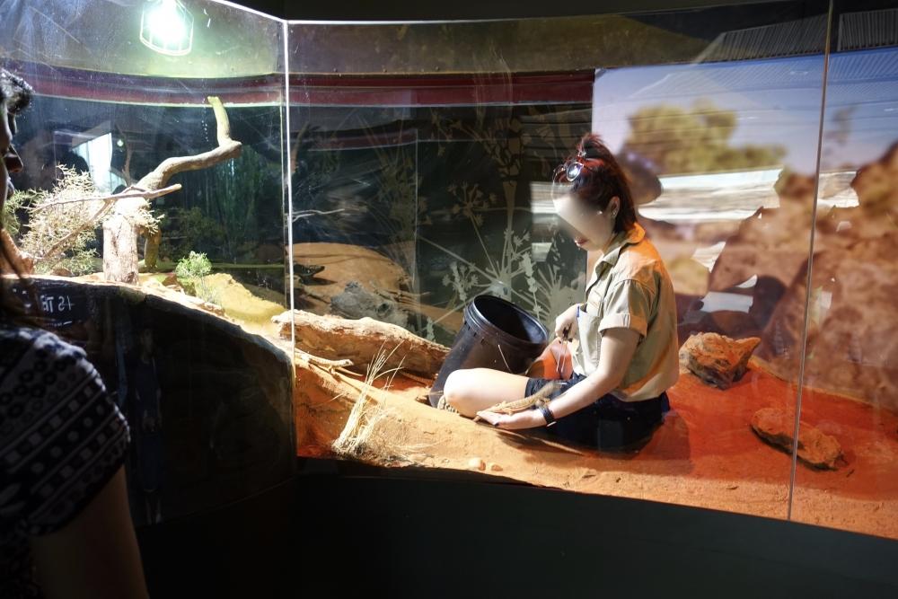 シドニーシーライフのトカゲの餌付け