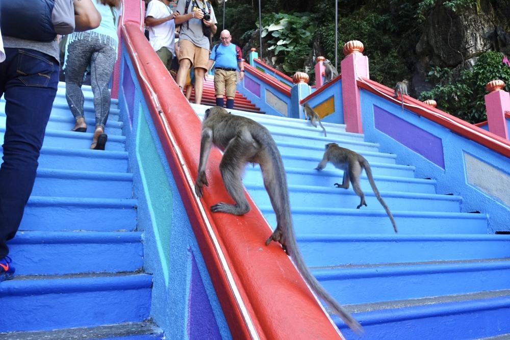 バトゥ洞窟の階段には猿がいっぱい